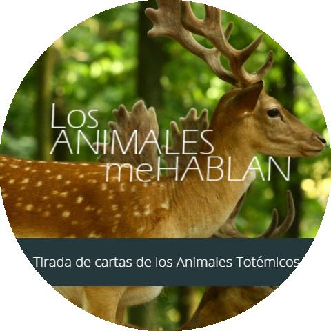 Diseño web Los Animales Me Hablan